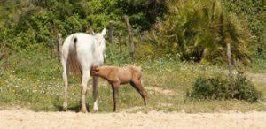 capitales-tarifas-caballo-helvetia