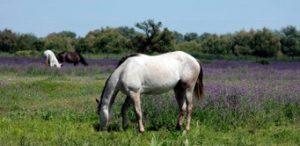 responsabilidad-civil-caballo-helvetia